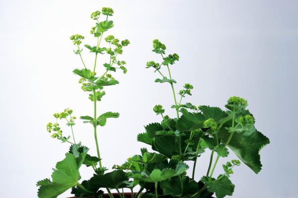花卉艺术图片 自然风景图 植物 绿叶花,自然风景,花卉艺术