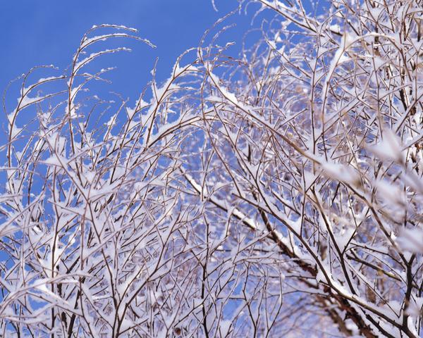 树枝 冰雪 景色 冬天雪景-自然风景-自然风景,冬天雪景