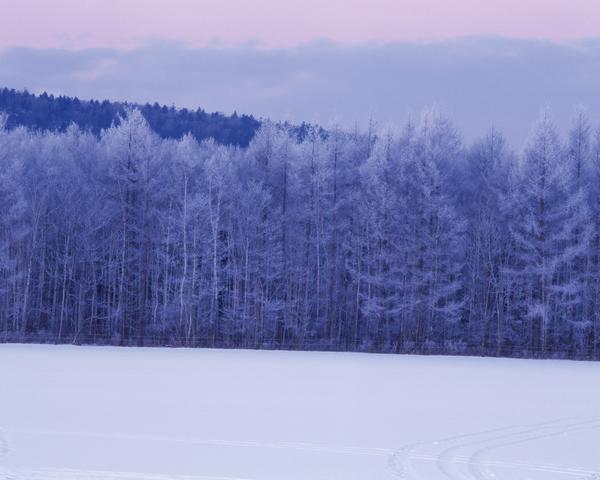 自然风景-冬天雪景 树林雪景