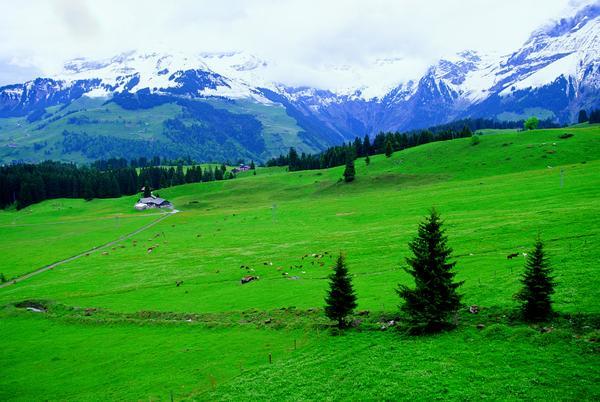 雪山 草地 绿色 新西兰澳大利亚-世界风光-世界风光,新西兰澳大利亚