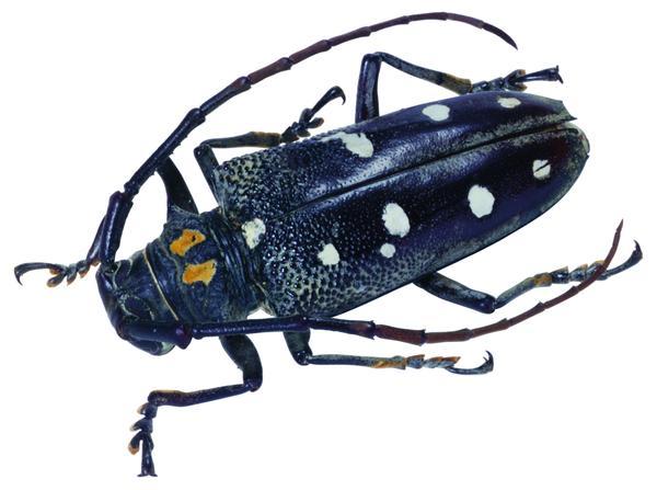 昆虫 爬行 生活 百类昆虫-动物-动物,百类昆虫