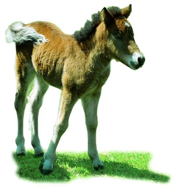 马图片 动物图 草 了 阳光 影子,动物, 马 高清图片
