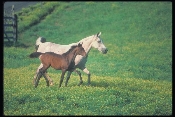奔跑 对照 外表 马-动物-动物,马
