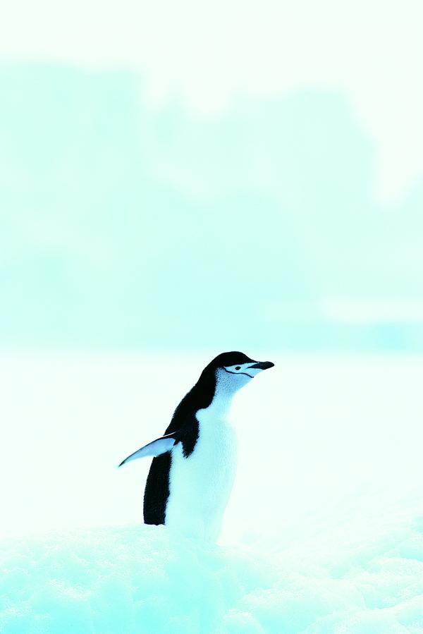 奔跑 蓝色 海水 企鹅世界-动物-动物,企鹅世界