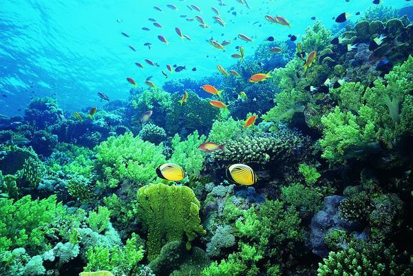 水草 海底植物 海洋动物 海底世界-动物-动物,海底世界