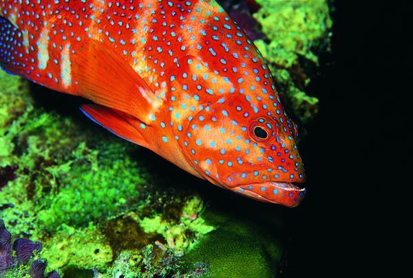 大鱼 深海 斑纹 海底世界-动物-动物