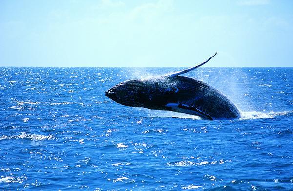 跳跃 海面 飞溅 海底世界-动物-动物,海底世界