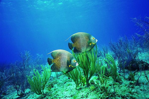 比目鱼 水底 戏水 海底世界-动物-动物,海底世界