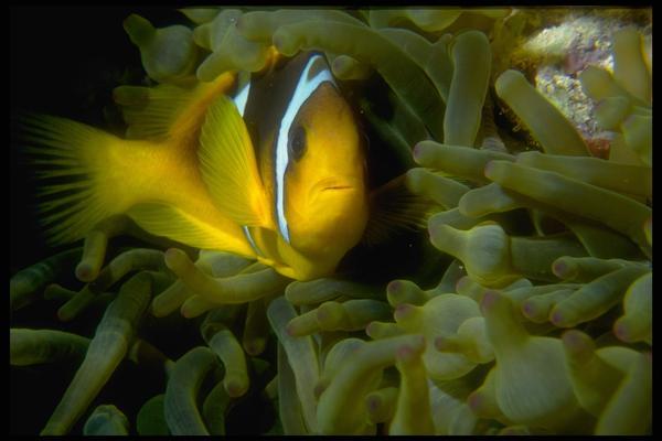 海底世界图片-动物图,动物