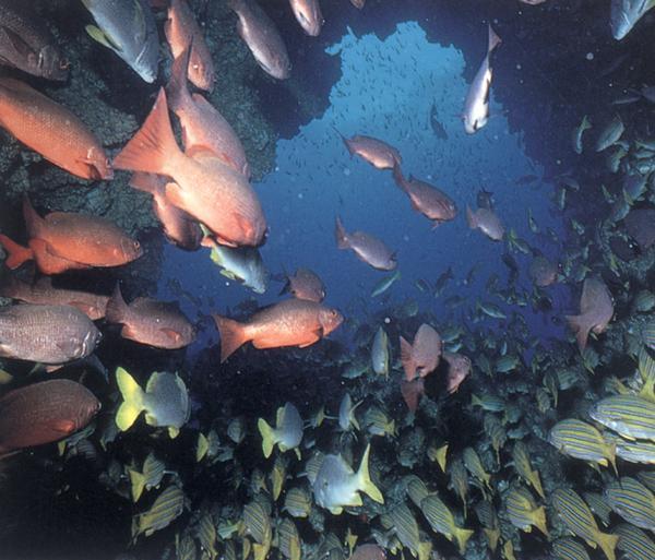 海底世界-动物-动物,海底世界