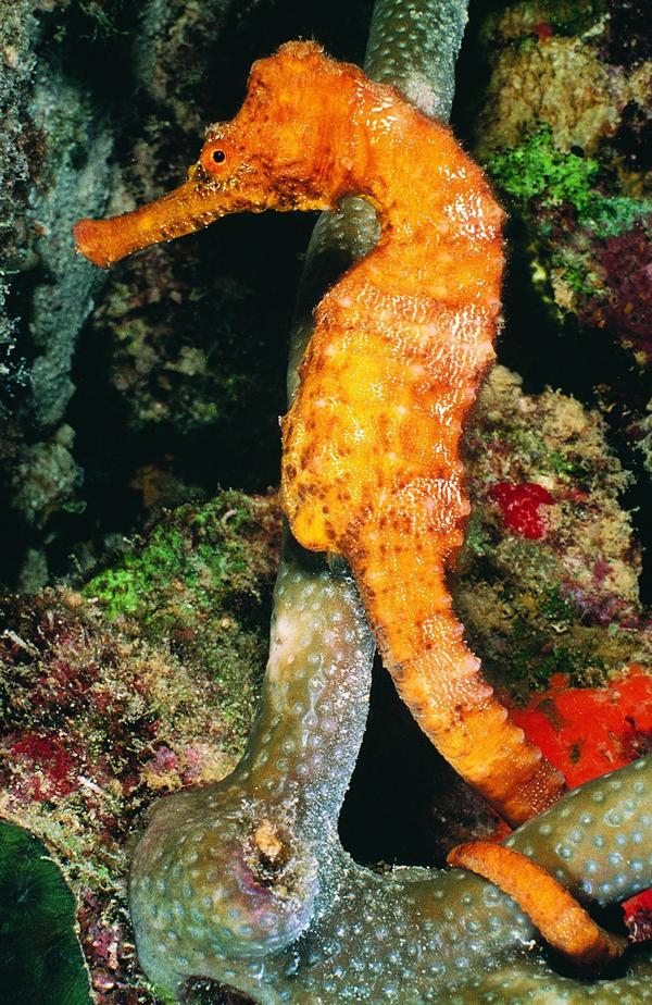 海底世界图片-动物图 海底生物