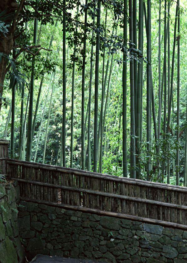 建筑-日本古建筑 清新地点 竹林 笔直树干