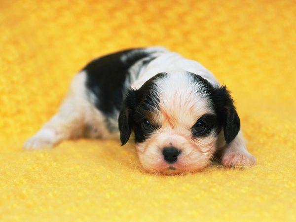 可爱狗狗图片-动物图 刚出生的小狗