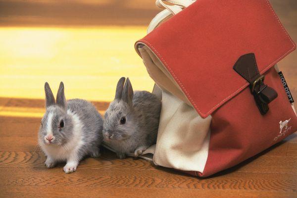 动物小兔子萌_原宿软妹羊毛毡毛绒萌动物小兔子小狗鸭子小猪