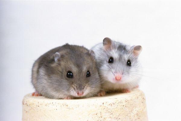 两只小老鼠 可爱小动物-动物-动物