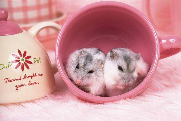 可爱小动物-动物-动物
