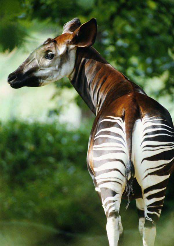野生动物图片-动物图 自然界生物