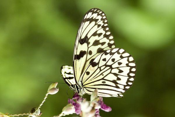 蝴蝶飞舞图片-动物图,动物
