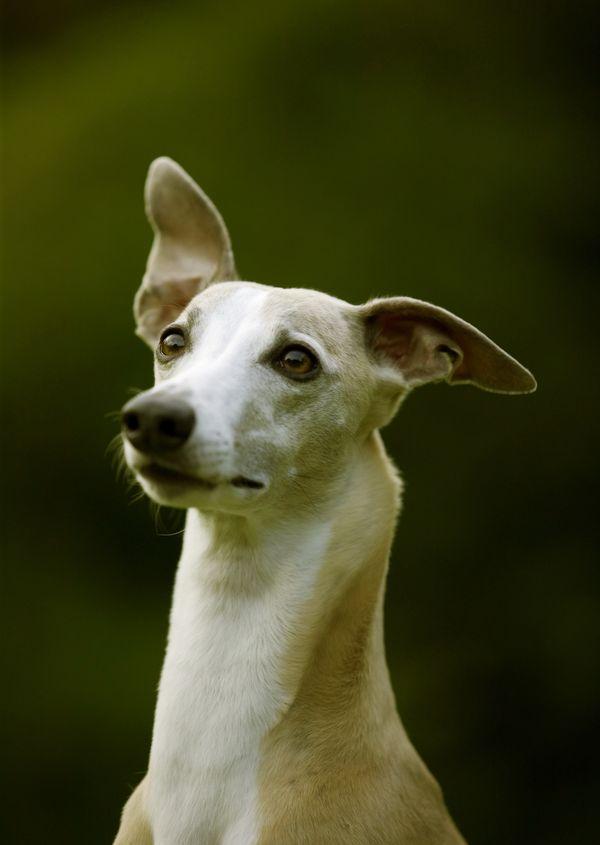 宝贝狗狗图片-动物图 宠物