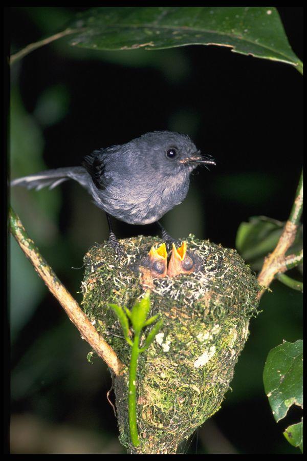 非州鸟类图片-动物图 蜂鸟
