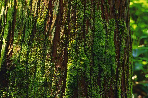 树皮 古树 苔藓 树之百态-植物-植物,树之百态