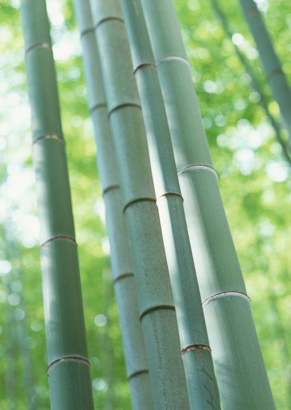 竹林 竹子 风景