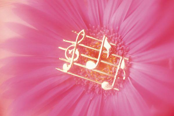古典音乐-静物系列-静物系列图片