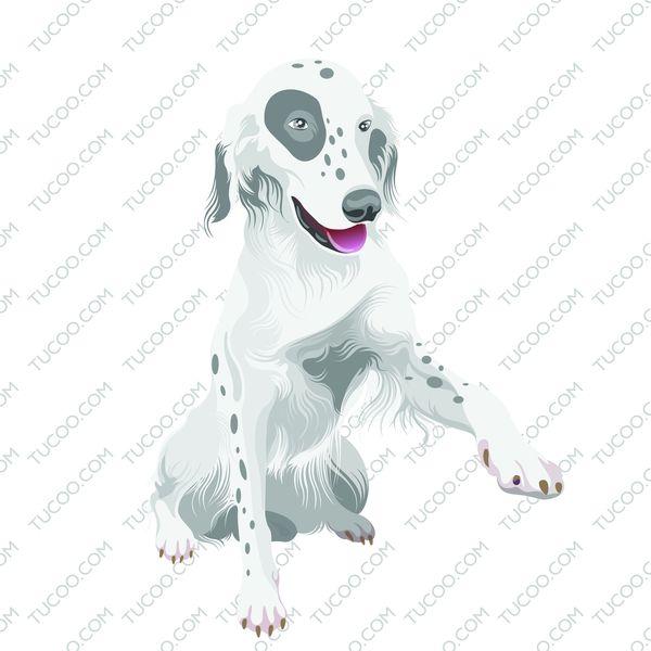 韩国狗狗生肖图片-时尚矢量插画图 斑点狗,时尚矢量