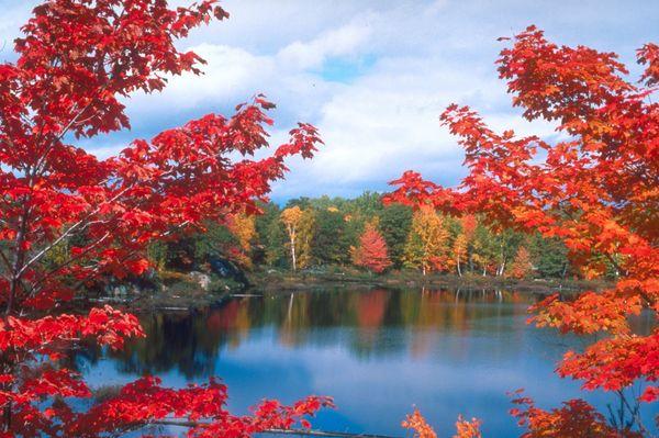四季风景-风景全集-四季风景,满山红叶 满山红叶