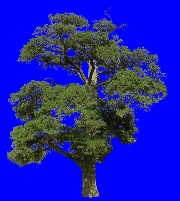 大副树木-植物-植物,大副树木