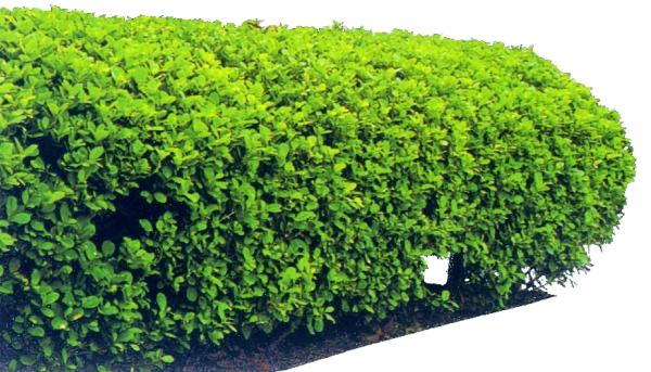 灌木-植物-植物,灌木