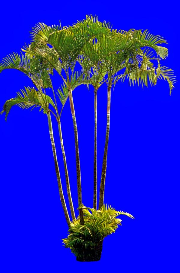 热带丛林 矢量图