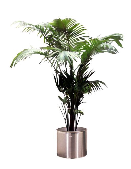 室内植物-植物-植物,室内植物