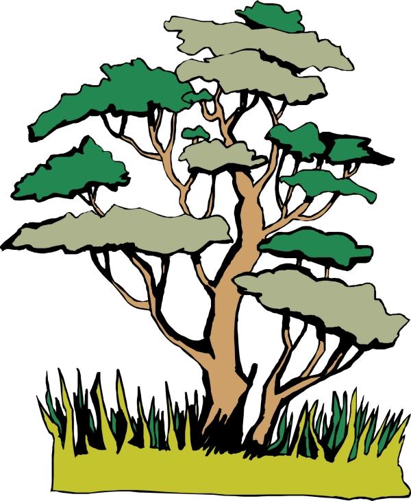 树木图片-植物图,植物