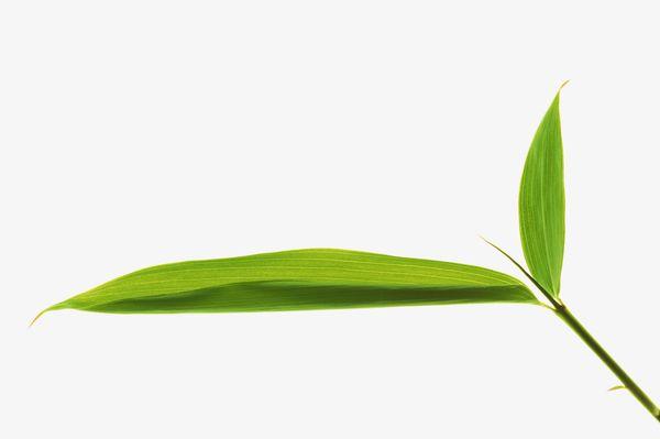 自然风景-树叶 绿色 植物 叶子