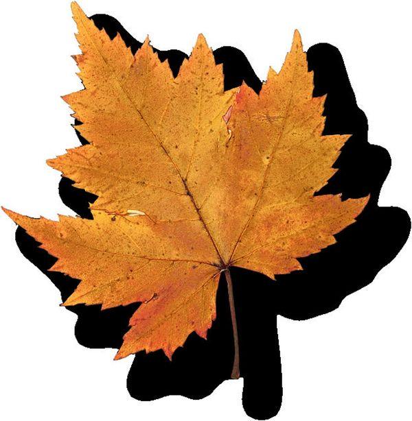 树叶图片-自然风景图,自然风景