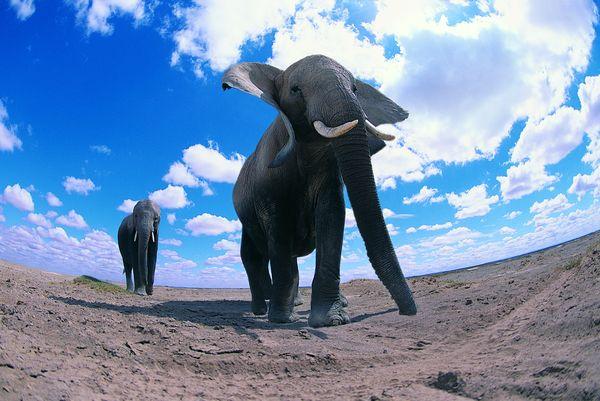 大象王国图片-动物图 平原上