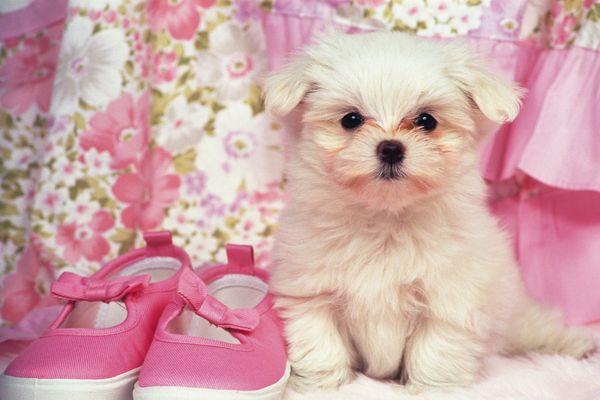 可爱狗狗图片-动物图 小狗