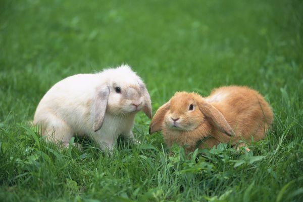 食物 青草 享受 可爱小动物-动物-饮食水果,可爱小动物