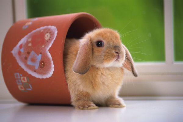 可爱小动物图片-动物图