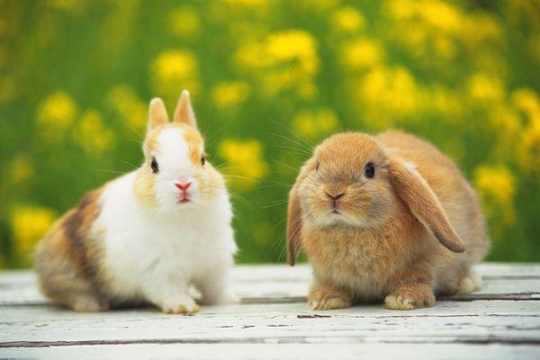 兔子 雌兔 可爱上动物 可爱小动物-动物-饮食水果,可爱小动物