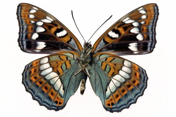 缤纷彩蝶图片-动物图 益虫