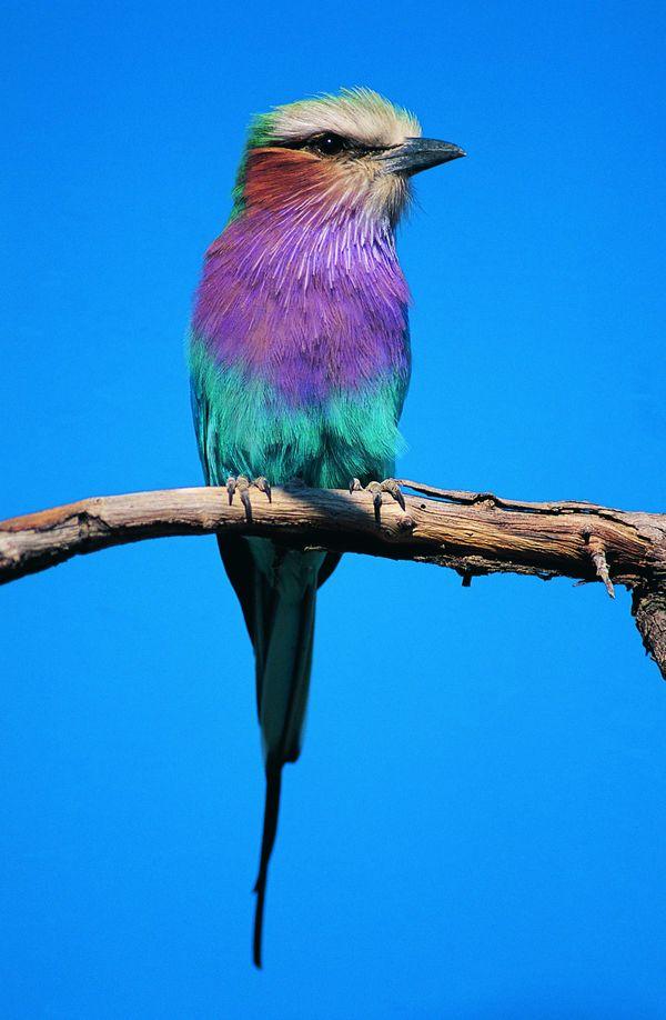 鸟类百科图片-动物图,饮食水果