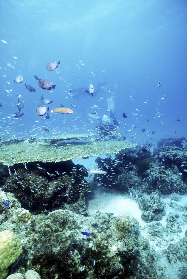 水中世界图片-动物图 海底