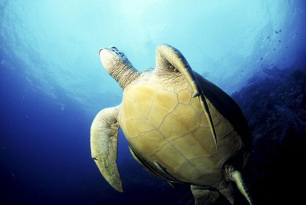 动物-水中世界 乌龟 动物 水生生物