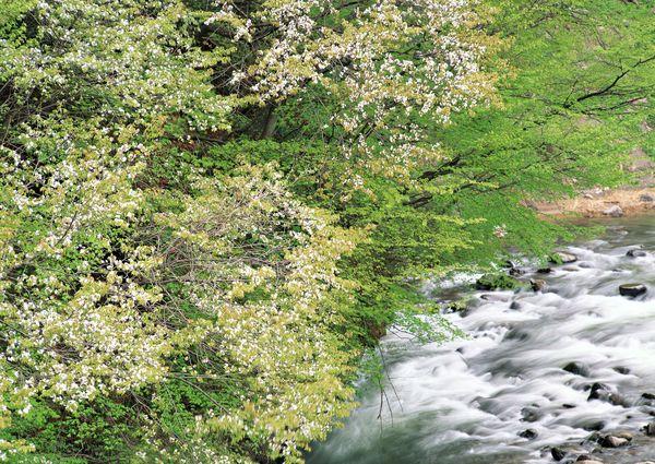 溪流水源图片-自然风景图