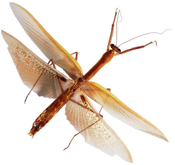 爬行动物,昆虫0341.jpg