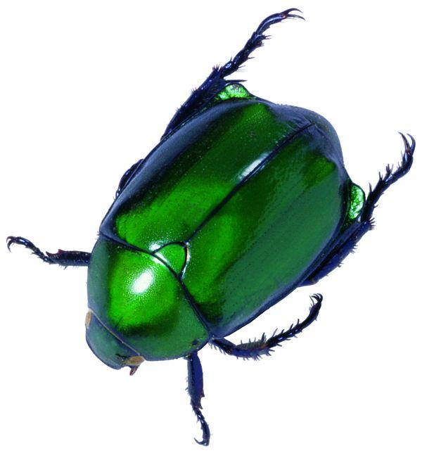 爬行动物,昆虫0387.jpg