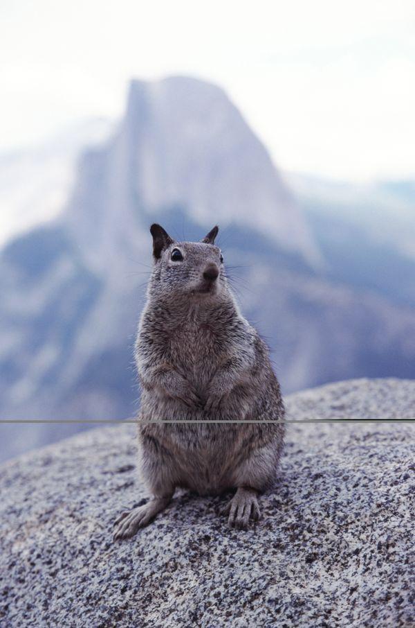 动物世界图片-动物图 山鼠
